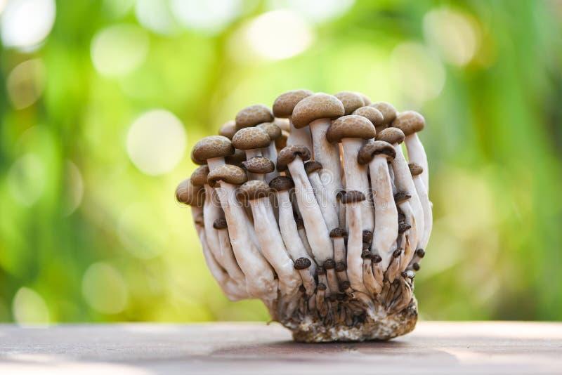 在木自然绿色背景的Shimeji蘑菇 免版税库存图片