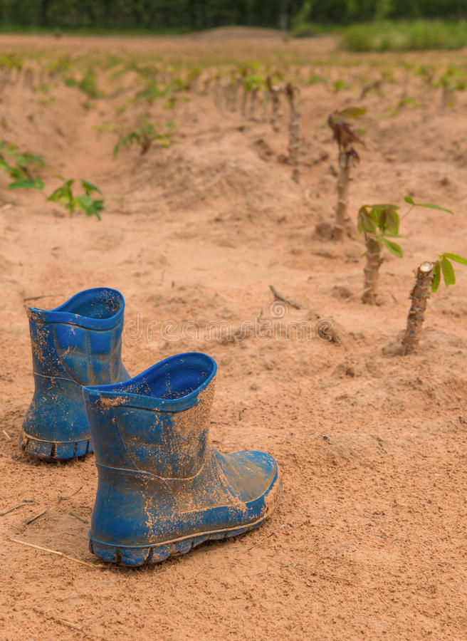 在木薯的泥盖的对肮脏的起动种田 图库摄影