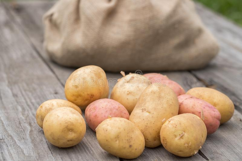 在木表上的年轻土豆在庭院里 免版税图库摄影