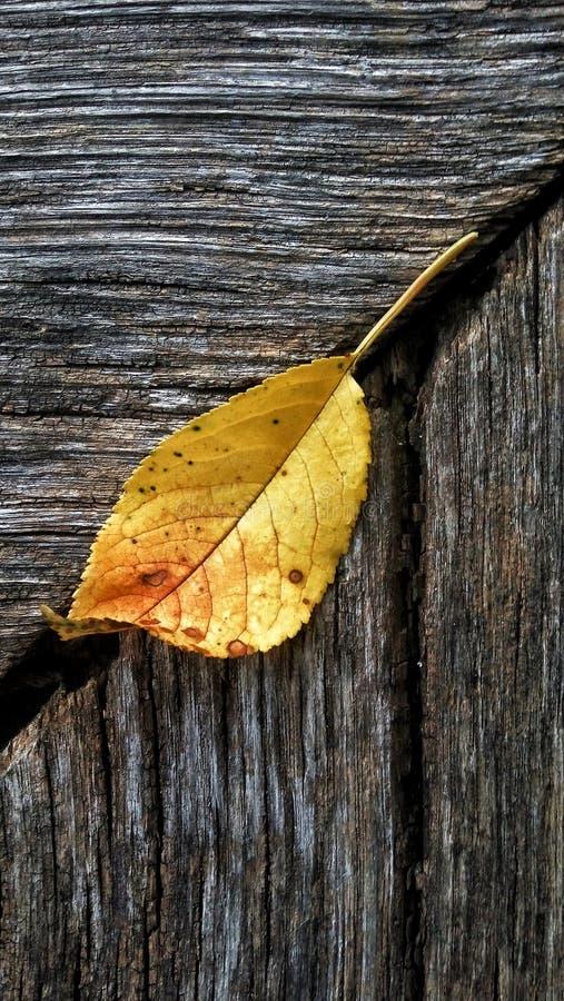 在木头的叶子在细节 库存照片