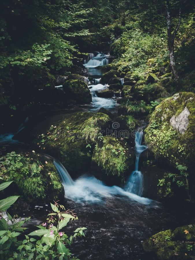 在木头的微小的瀑布 库存图片