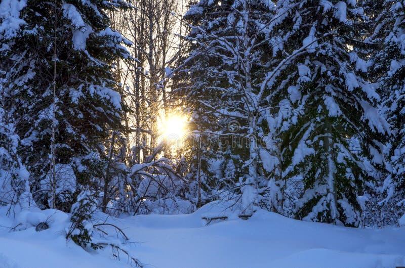 在木头的日落在冬天在俄罗斯西伯利亚 免版税图库摄影