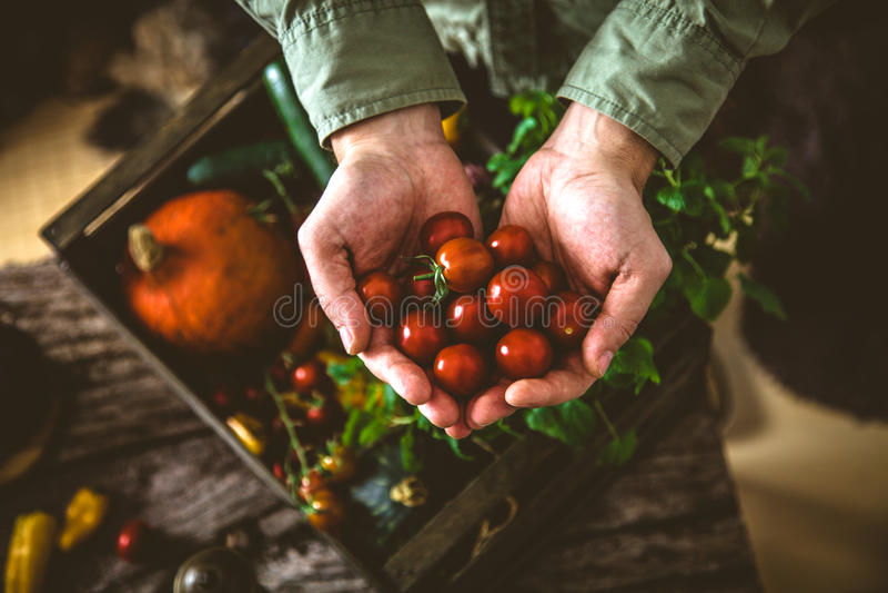 在木头的有机菜 图库摄影