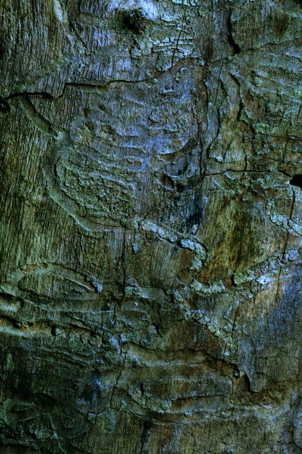 在木头的样式 库存图片