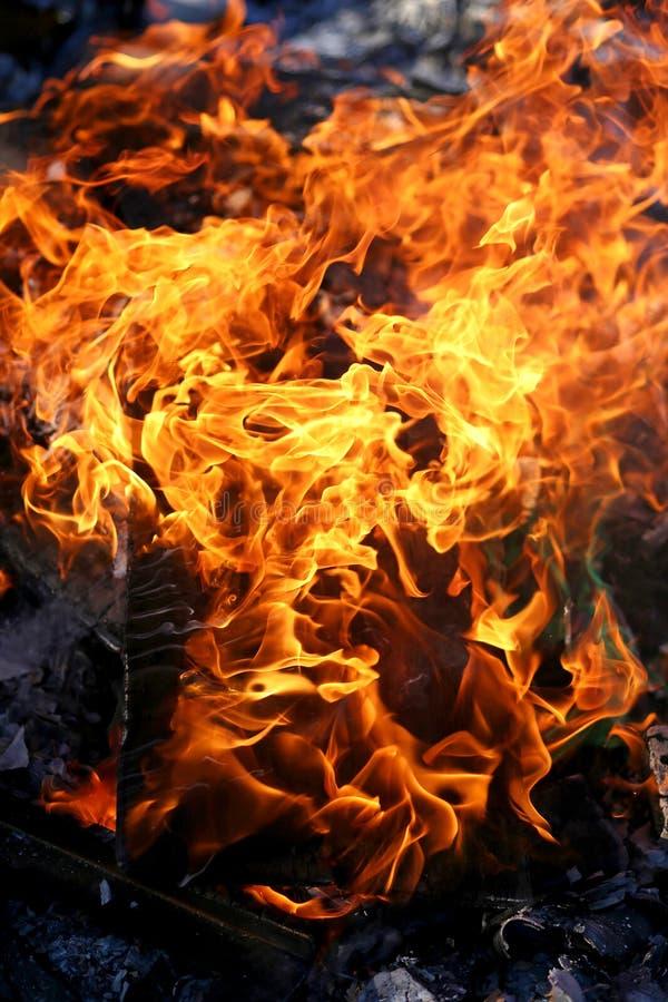 在木头的火焰在室外夏天篝火 库存照片