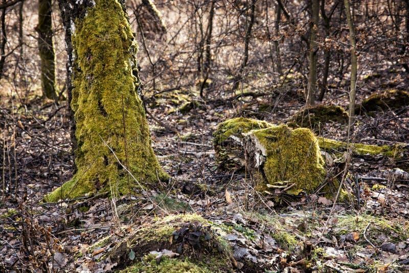Download 在木头的秋天与下落的叶子和青苔 库存图片. 图片 包括有 横向, 划分为, brander, 户外, 花卉 - 62539367