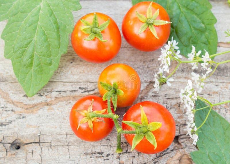 在木头的蕃茄 库存图片