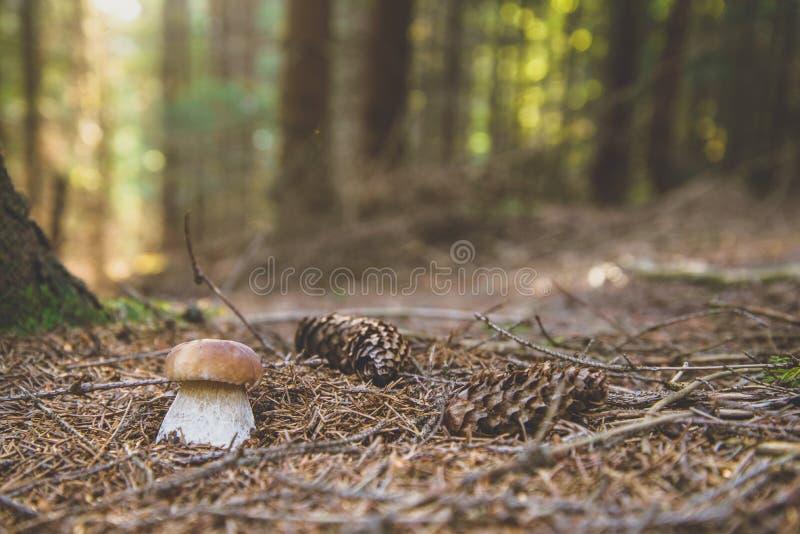 在木头的蘑菇 免版税库存照片