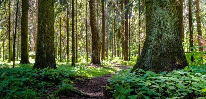 在木头的道路 免版税库存照片