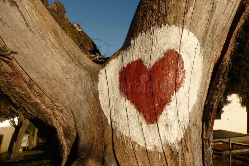 在木头的重点 免版税库存图片