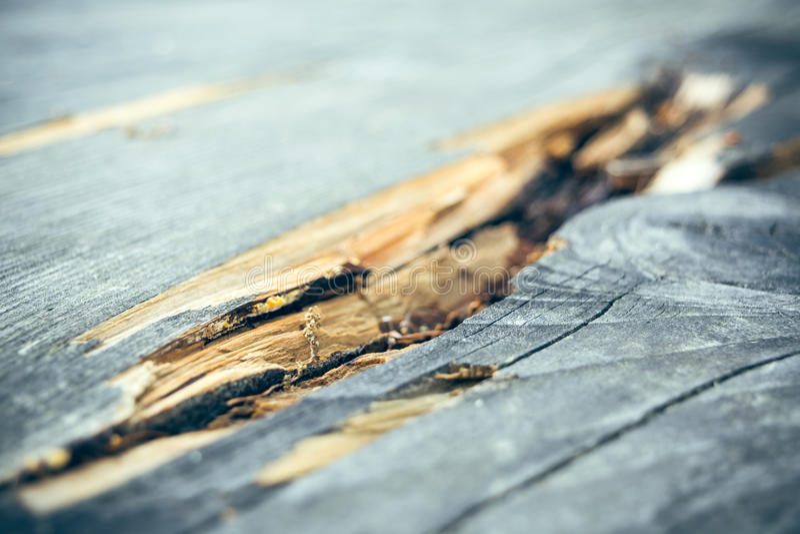 在木头的镇压 免版税库存图片