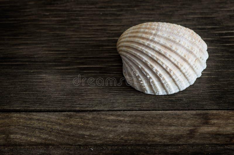 在木头的贝壳 免版税库存图片