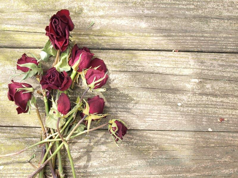 在木头的死的玫瑰 库存照片