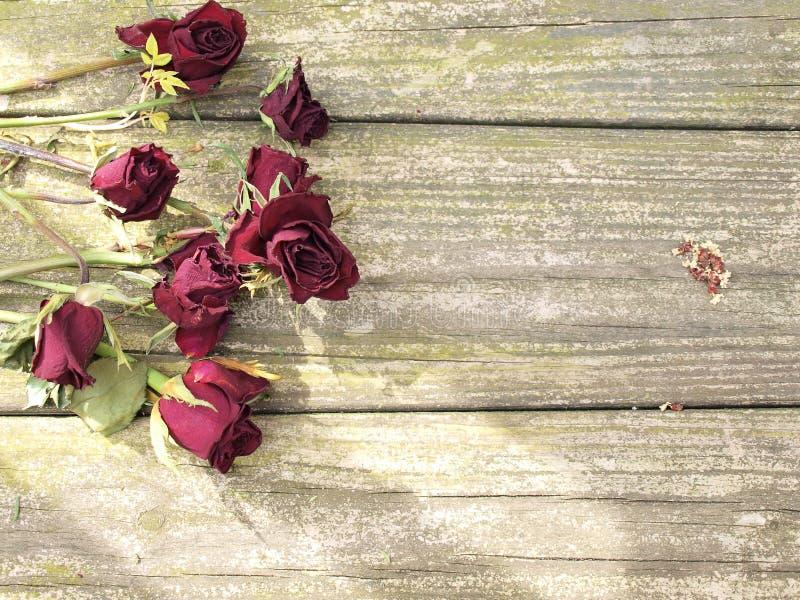 在木头的死的玫瑰 免版税库存图片