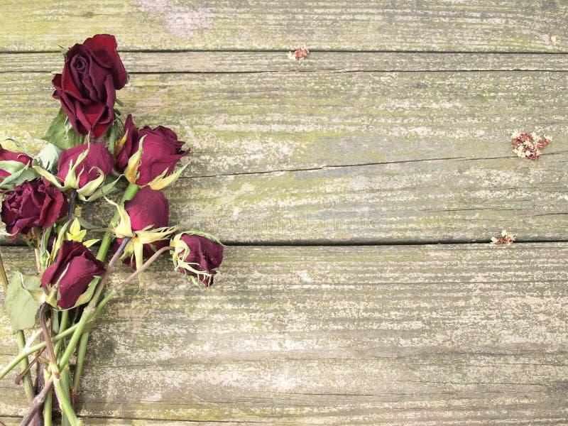 在木头的死的玫瑰 免版税库存照片