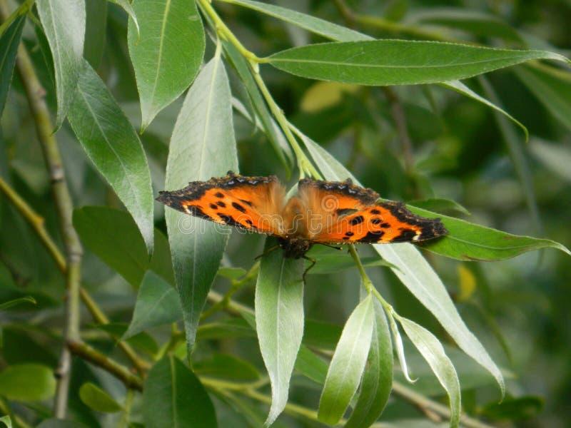 在木头的蝴蝶 库存图片