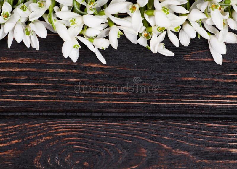 在木头的Snowdrops束 库存图片