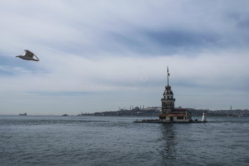 在未婚的塔附近的海鸥飞行 未婚的塔Kiz Kulesi,利安德的塔,Leandros伊斯坦布尔,土耳其塔  免版税库存图片