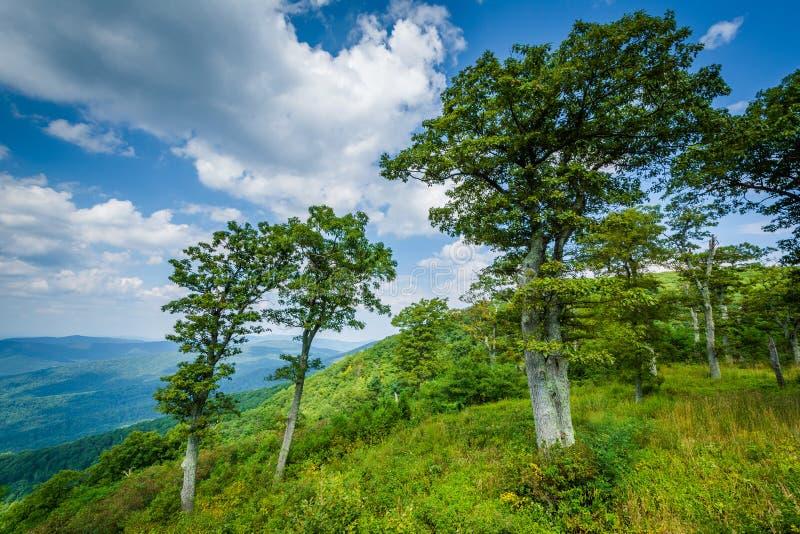 在朱厄尔凹陷的树在地平线驱动俯视,在Shenandoah 免版税库存图片