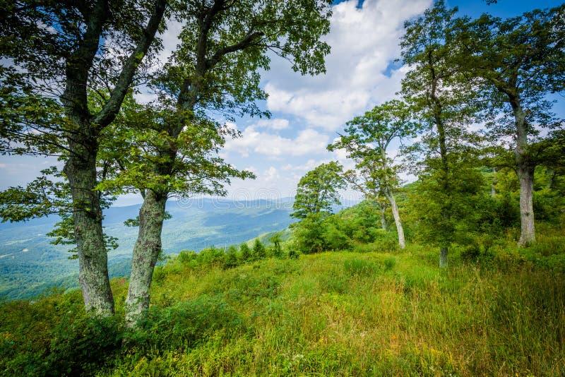 在朱厄尔凹陷的树在地平线驱动俯视,在Shenandoah 库存照片