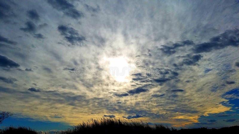 在杂草的太阳 图库摄影