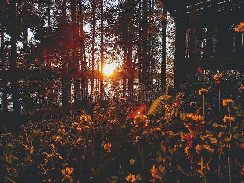 在杉木常设夏天日落结构树二之后 库存照片