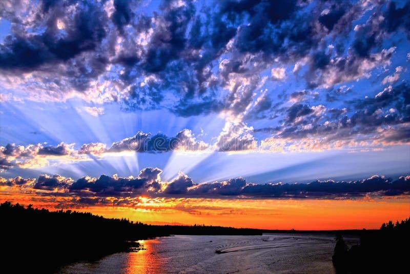 在杉木常设夏天日落结构树二之后 库存图片