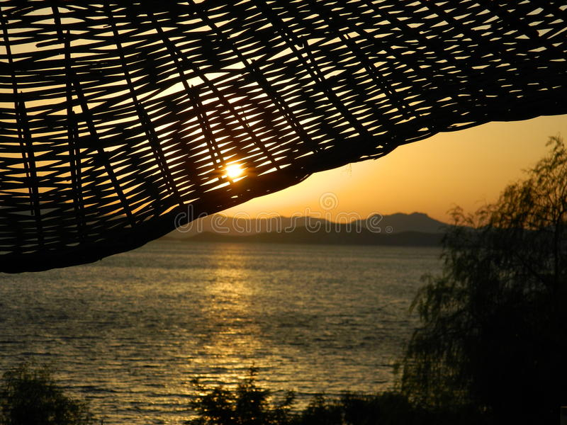 在杉木常设夏天日落结构树二之后 免版税图库摄影