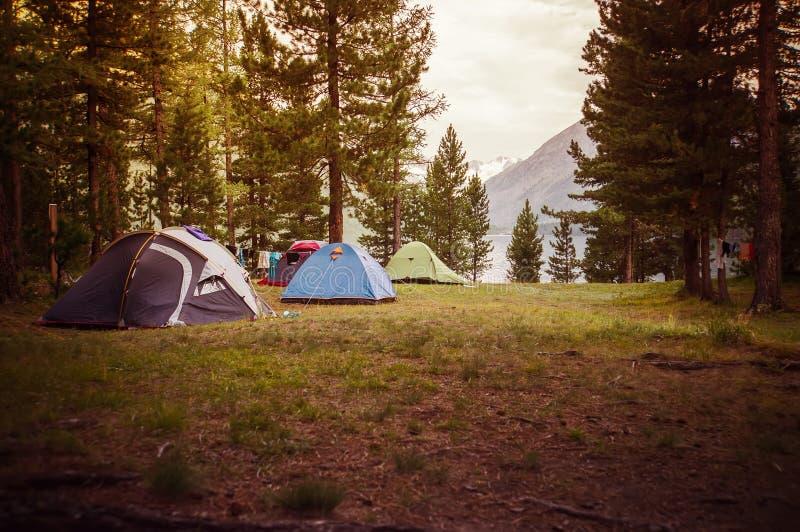 在杉木森林下的冒险野营和帐篷在水附近 免版税图库摄影