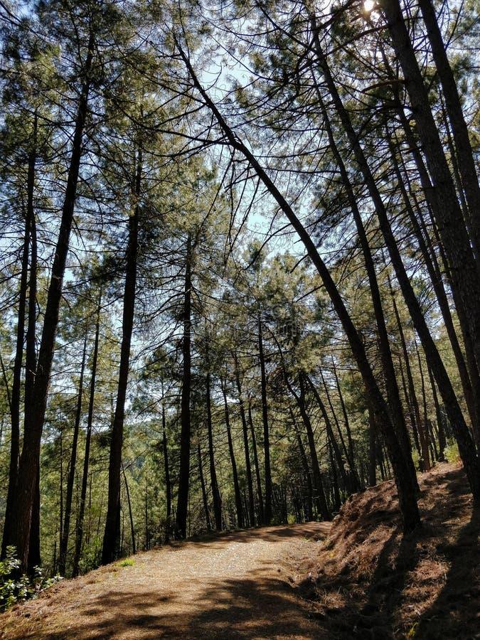 在杉木森林中的土路西班牙中部山的  免版税库存照片