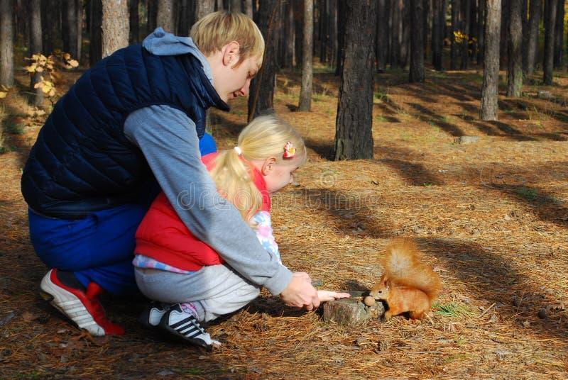 在杉木森林父亲和女儿饲料灰鼠坚果。 免版税图库摄影