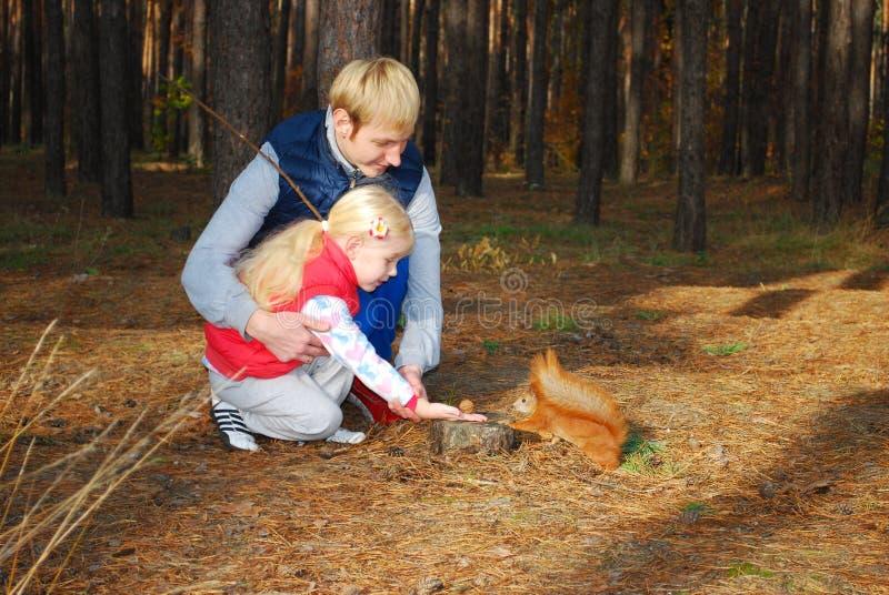 在杉木森林父亲和女儿饲料灰鼠坚果。 免版税库存照片