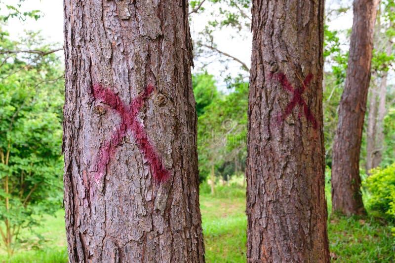 在杉木的红色标志十字架标记,切开的 免版税库存照片