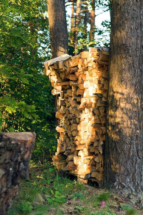 在杉木绿色森林里整洁地堆积的桦树木柴 库存图片