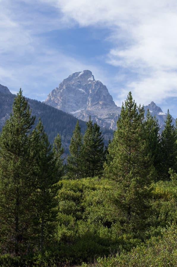 在杉树后森林的大提顿峰山  库存照片