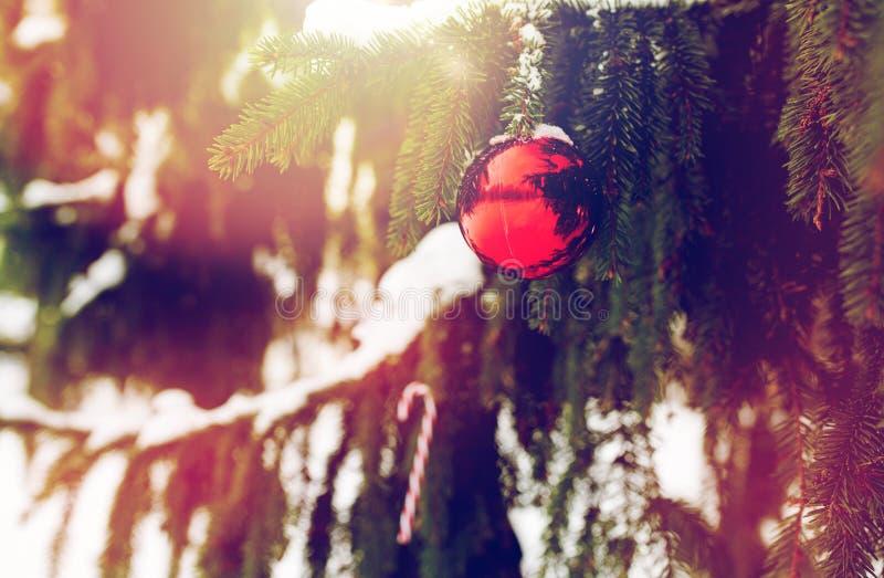 在杉树的棒棒糖和圣诞节球分支 免版税库存照片