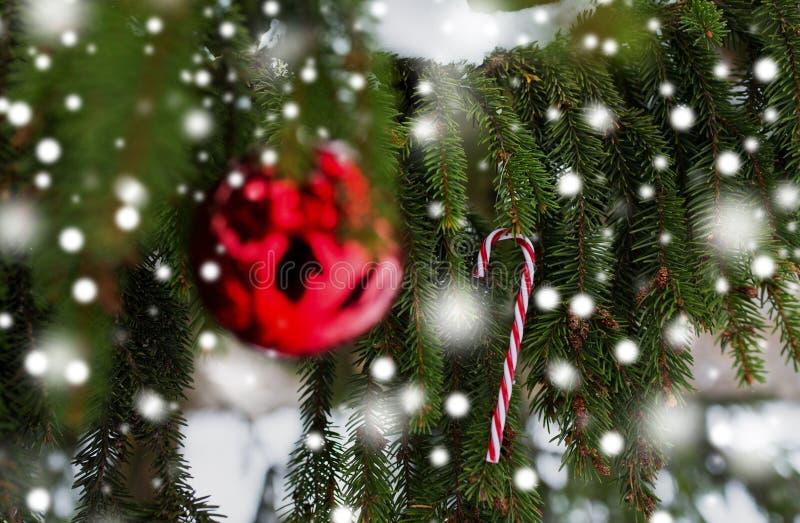 在杉树的棒棒糖和圣诞节球分支 免版税库存图片