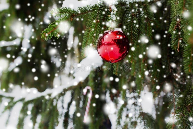 在杉树的棒棒糖和圣诞节球分支 库存图片