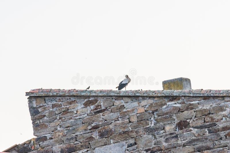 在村庄建筑放松的鹳 免版税图库摄影