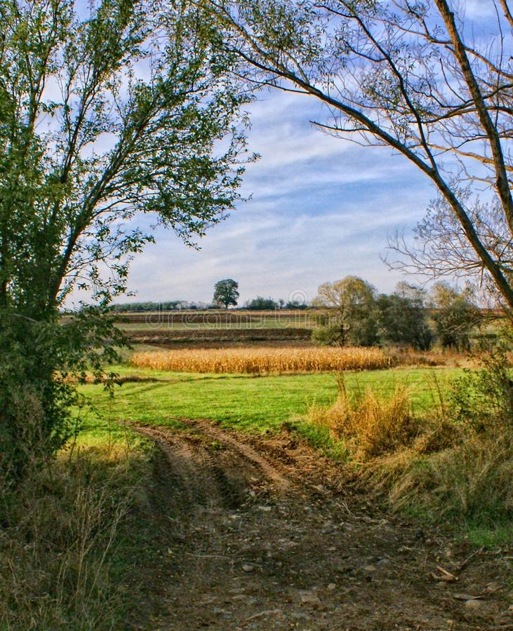 在村庄格拉查尼察附近的麦地 免版税库存图片