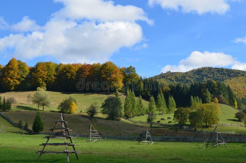 在村庄附近的森林 免版税库存图片