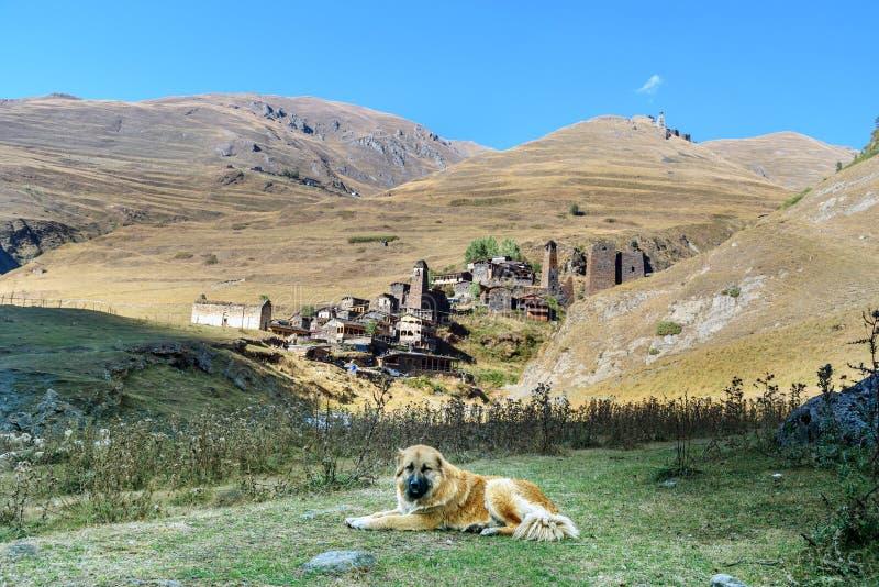 在村庄Dartlo附近的白种人牧羊犬Tusheti自然保护的 佐治亚 库存照片