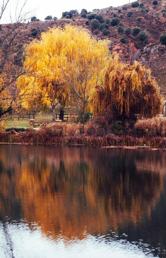 在杜罗河旁边的金黄树 库存照片