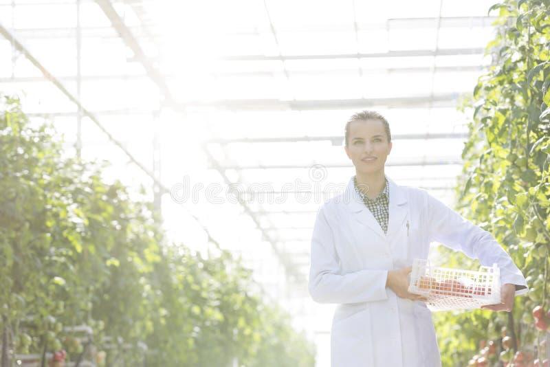 在条板箱的科学家运载的蕃茄由温室的植物 库存图片