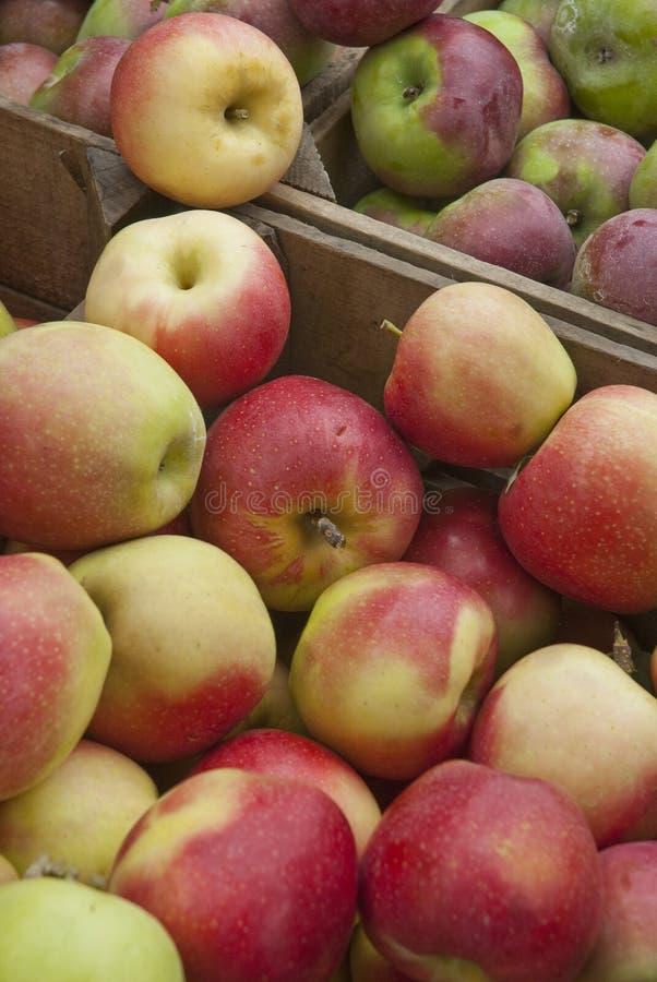 在条板箱的美味新鲜的苹果 库存照片
