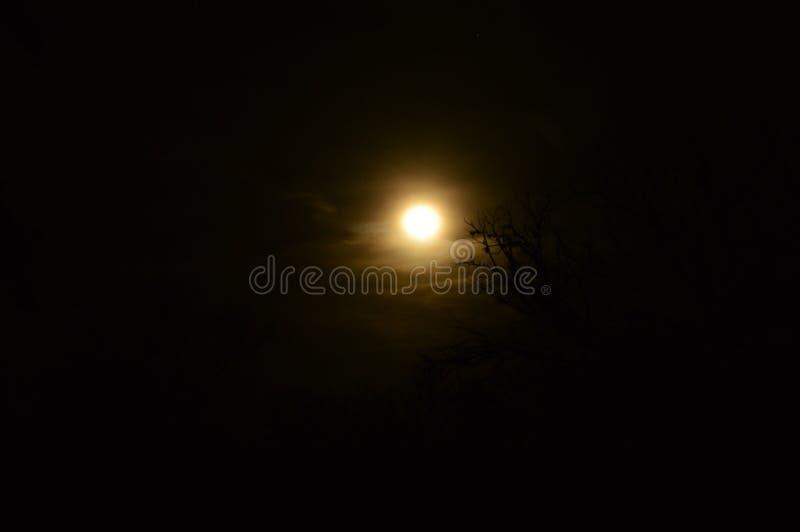 在杨柳后的月亮 库存照片