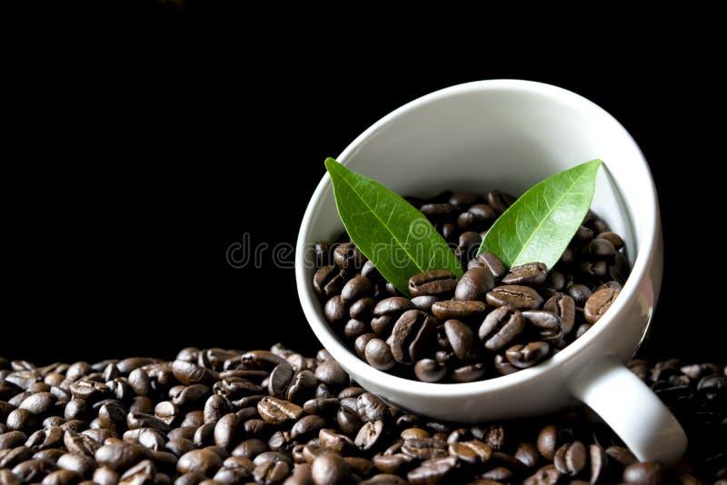 在杯子的咖啡豆有在木和黑暗的背景的叶子的 图库摄影