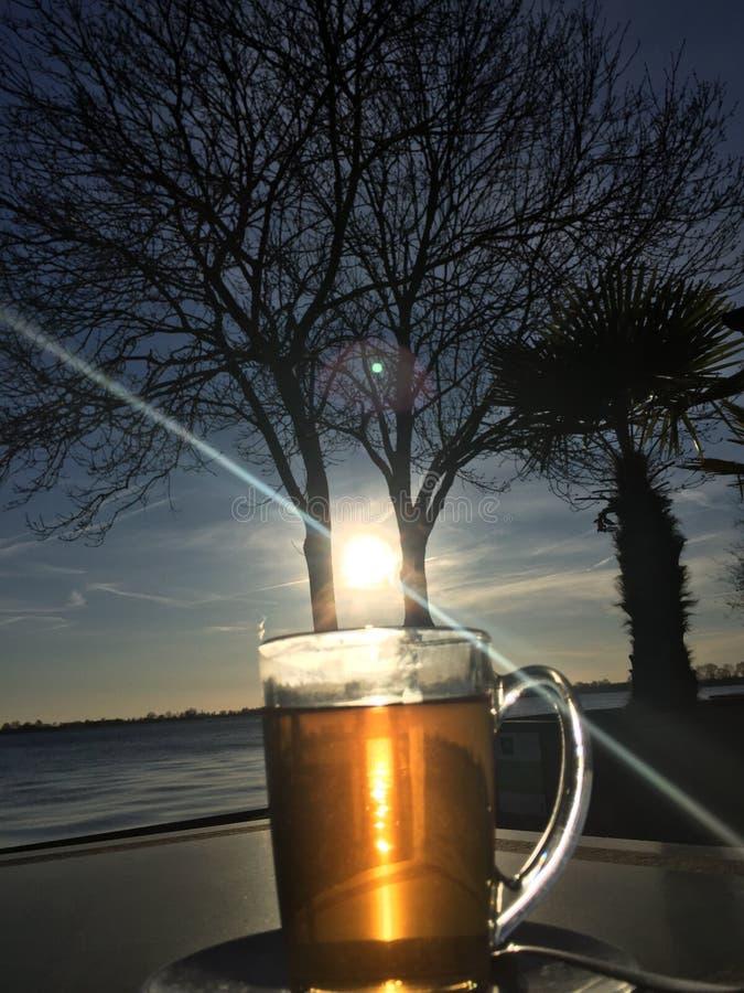 在杯子的太阳 免版税图库摄影