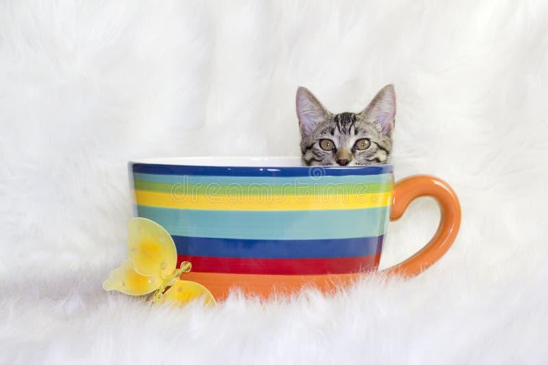 在杯子的猫 图库摄影