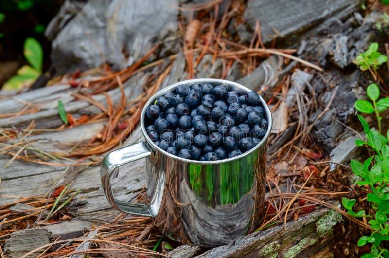 在杯子的越桔在杯子的森林新鲜的越桔在森林A杯子的地面上越桔 免版税库存图片
